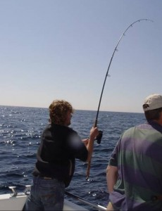 Joost drilt een zeebaars