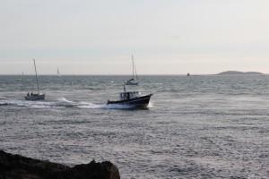 Zeebaars vissen Port-Navalo in Arzon