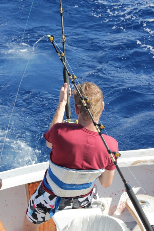 Madeira Big Game Fishing fight