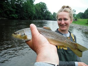 Upper river Wye Brown Trout (bruine forel)
